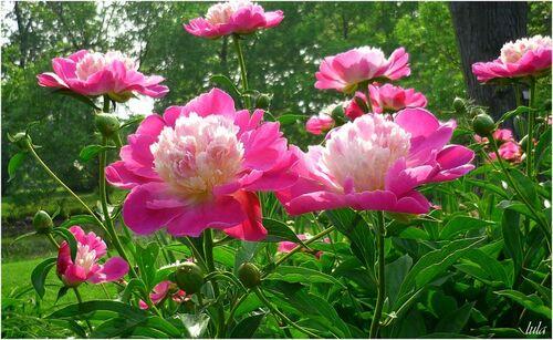 Index des Plantes à Fleurs