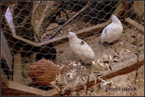 petits sortis du nid !