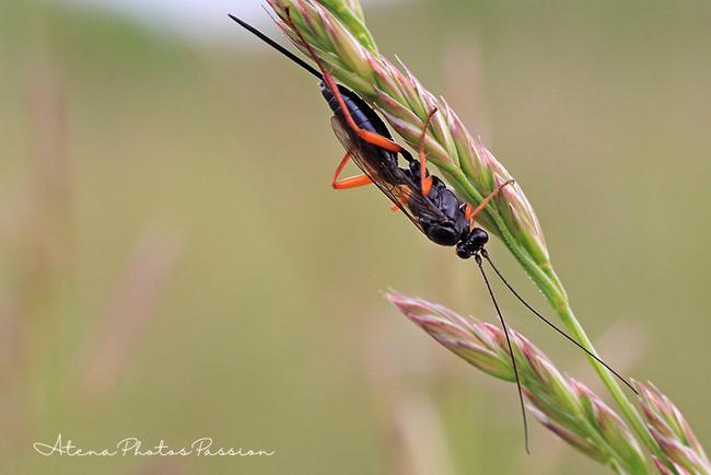 Insectes en série