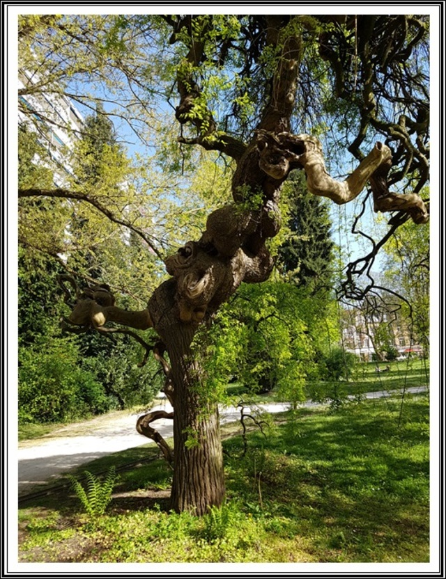 Metz..le jardin botanique