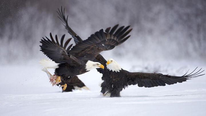 xx-animaux-dont-la-beaute-est-sublimee-par-les-couleurs-hivernales29