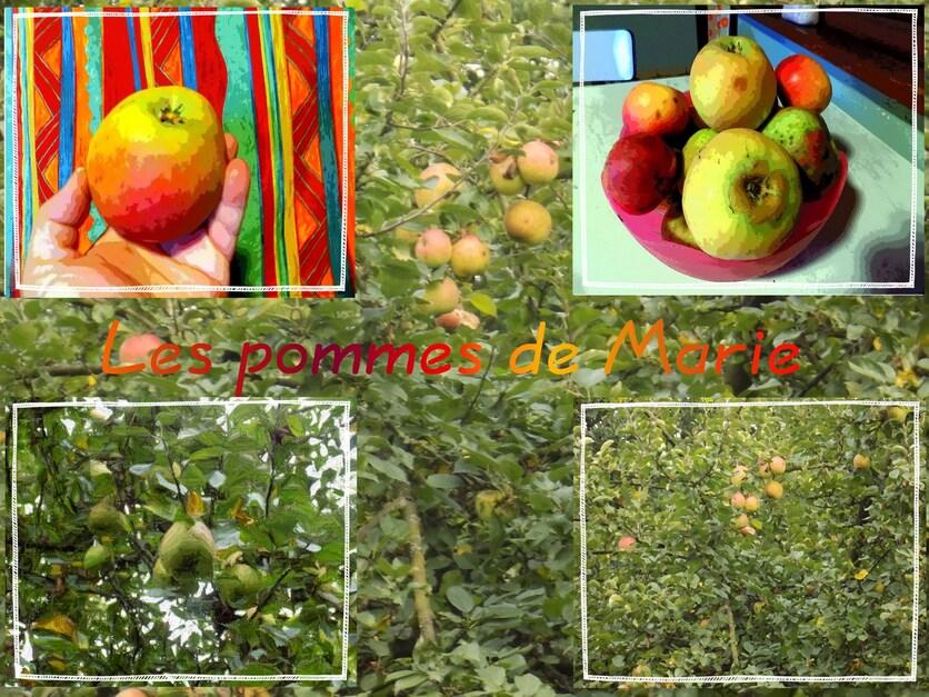 Les pommes de Marie
