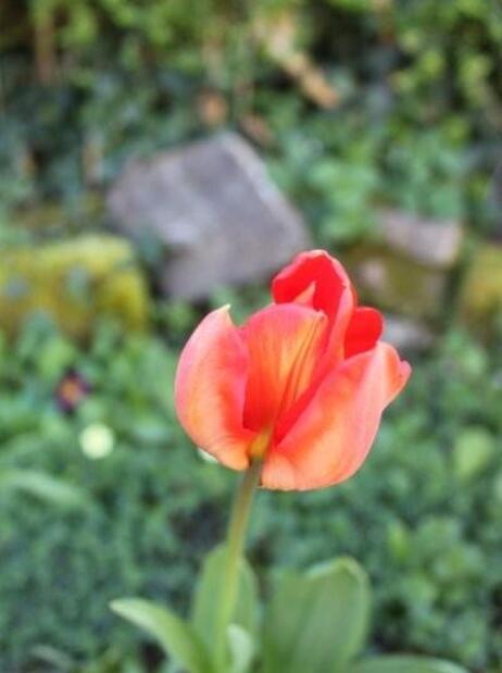 Fleurs de printemps (12)
