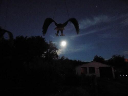Une ombre dans la nuit
