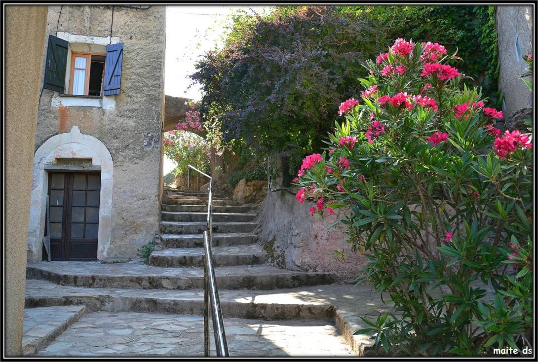 Piedigriggio - Corse
