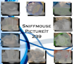 Picture It 239 - Sniffmouse