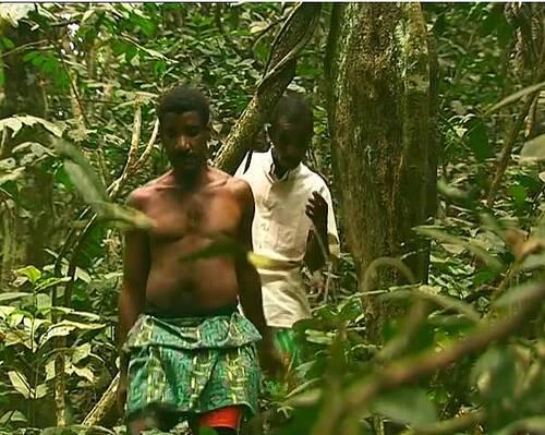 Peuple de la forêt : les pygmées