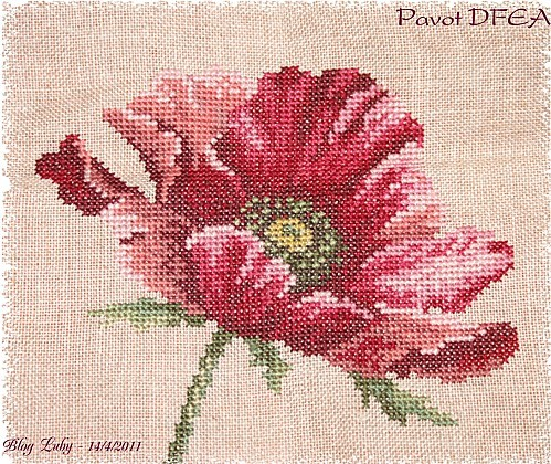 2011 8 4 pavot dfea (4)