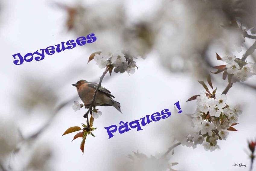 joyeuses-paques-1593.jpg