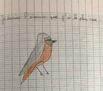 Les oiseaux de chez nous