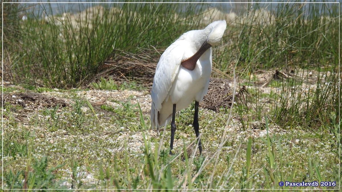 Printemps à la Réserve ornitho du Teich - Avril 2016 - 10/12