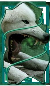 Partage d'avatars