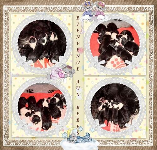 ♥ Naissance le 27 Mars 2010 des bébés de Denzel - fille d' Athos ♥