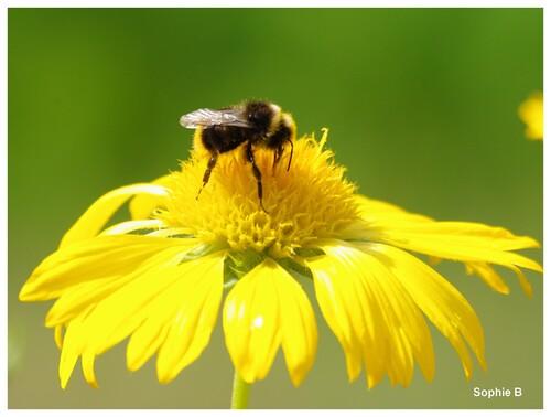 Les insectes et le jaune .