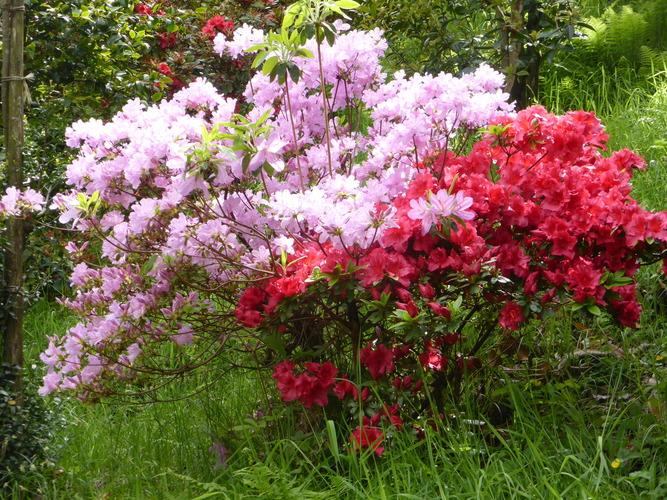 Au milieu des fleurs