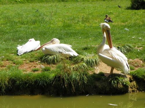 Le Parc des Oiseaux à Villars-les-Dombes ( 3 )