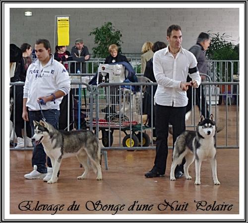 Rio et Glasko à l'Exposition canine de Castres (17 novembre 2012)