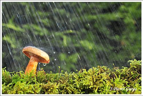 De beaux champignons photographiés par Jean-Pierre Gurga en automne 2012