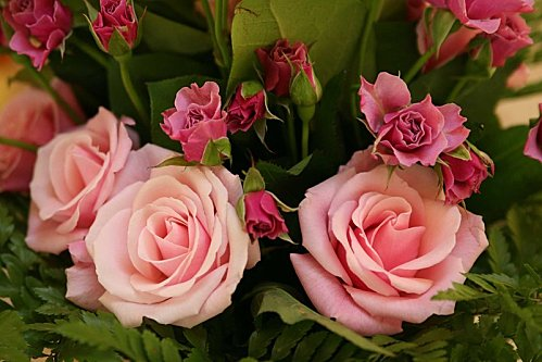 roses-logo.jpg
