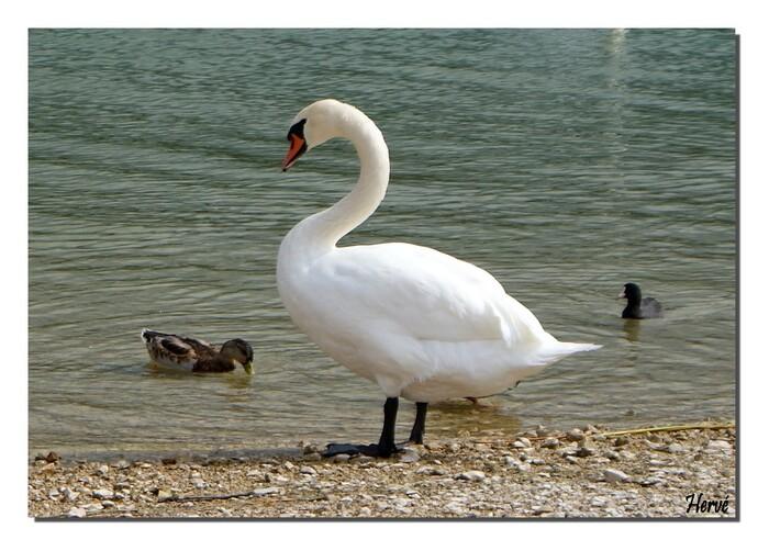 Au bord du lac Saint-Point