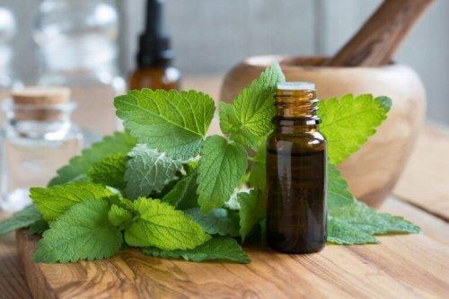 La mélisse : une plante aux nombreux bienfaits pour la santé