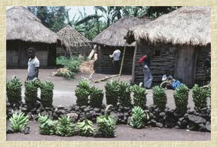 commerces congolais