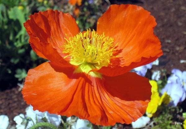 R03 - Orange