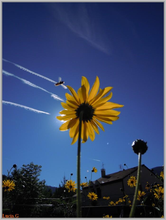 Thème : Fleurs d'été