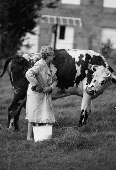 02 - Des vaches et le monde rural