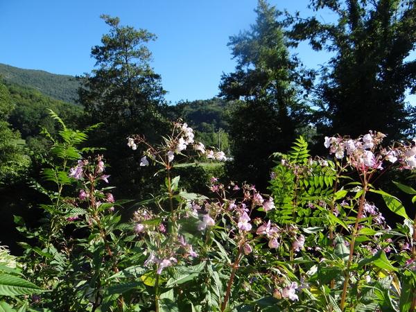 Fleurs sauvages des Pyrénées