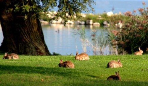Le déjeuner sur l'herbe; la suite .....