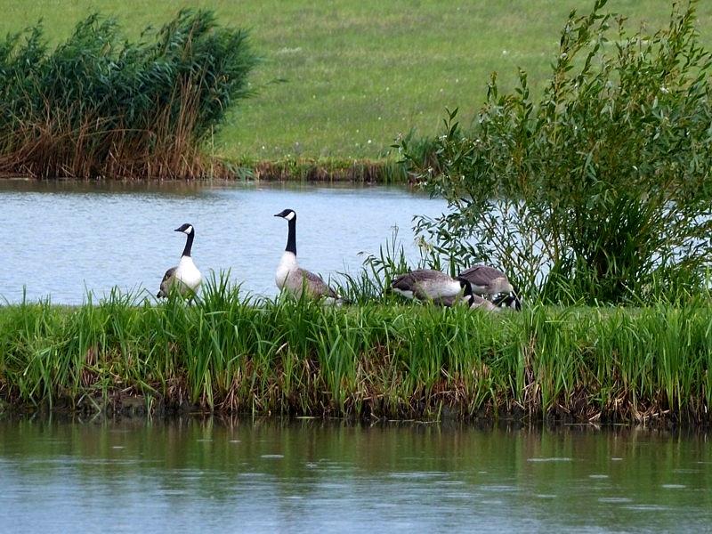 Découvrir la Moselle / Les étangs de Shirmenstuden à Maxstadt...