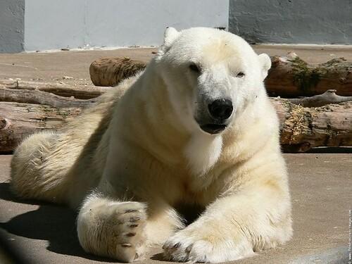 Une histoire d'ours (ils sont en danger)