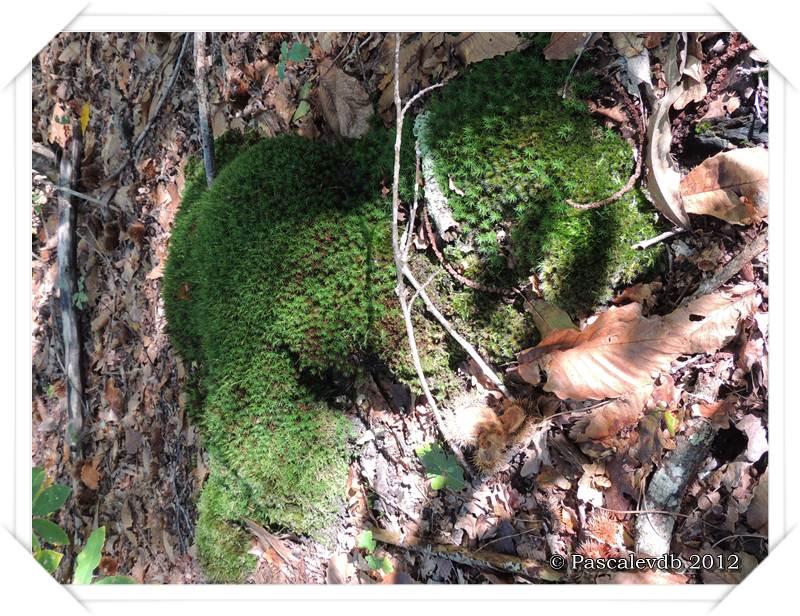 Cueillette de champignons sur la route de Lacanau - 1/4