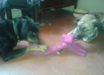 Corde à jeux pour chien DIY