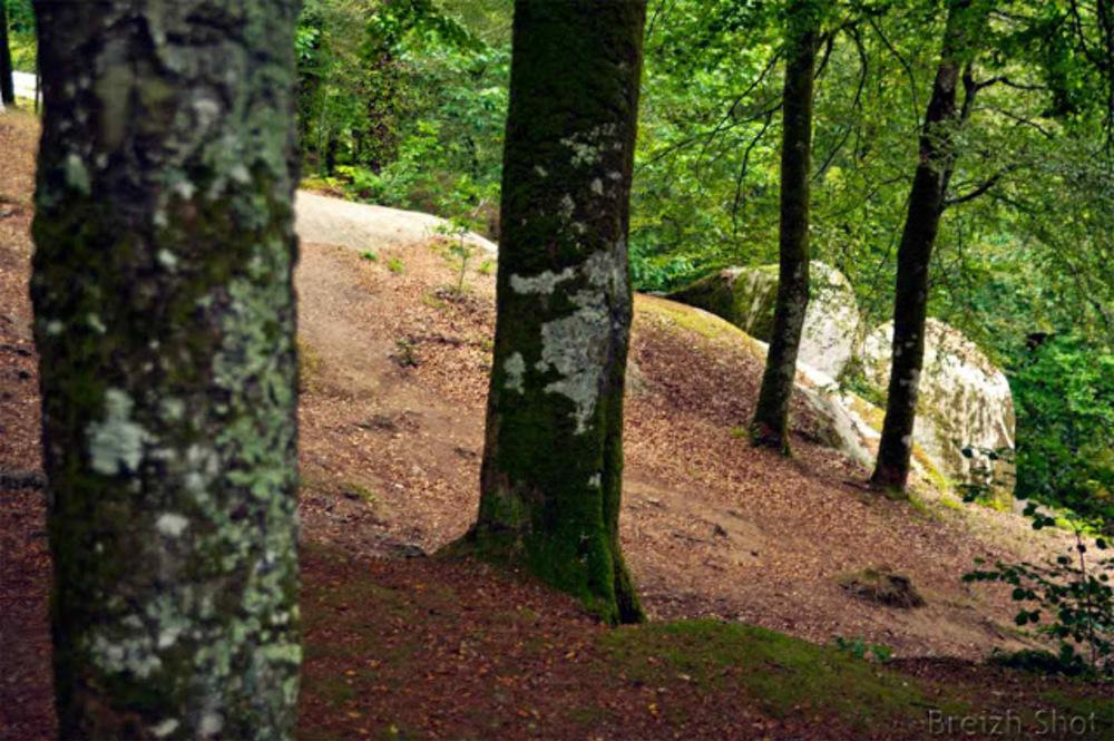 """Huelgoat : Les sous-bois de """"la forêt d'en haut """""""