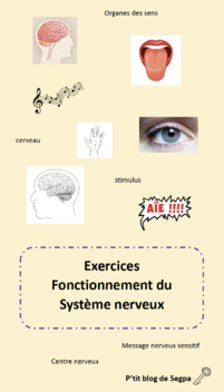 Exercices système nerveux