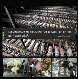 animaux enfer rec