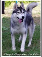 Janouska (11 mois, en mue, lors d'une visite à l'élevage)