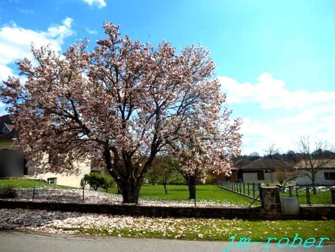 Le lundi «Vélo ...le mardi jardin sous le soleil