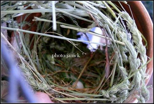 sortie du nid pour mes petits verdiers !