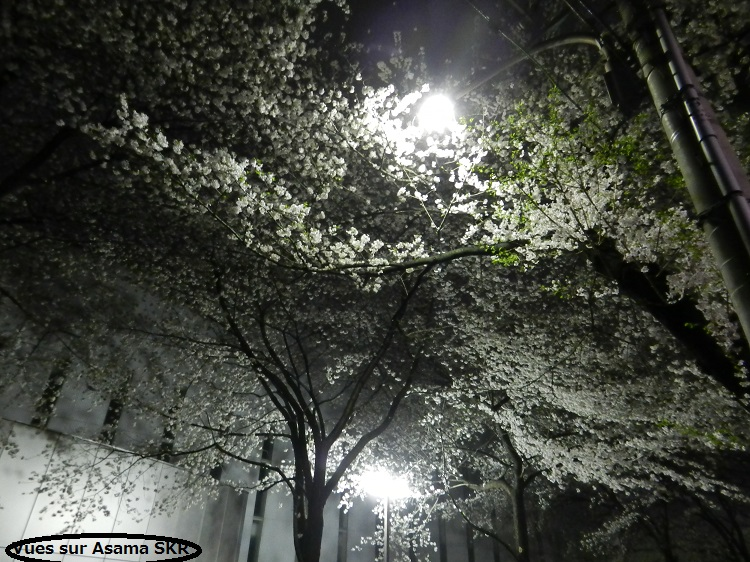 Sakura...by night