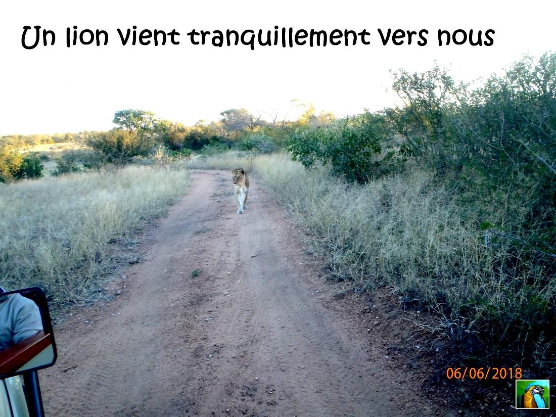 AFRIQUE du SUD : juin 2018 : 2 ème safari