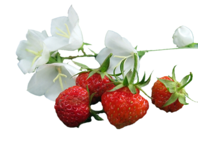 retour avec la fraise