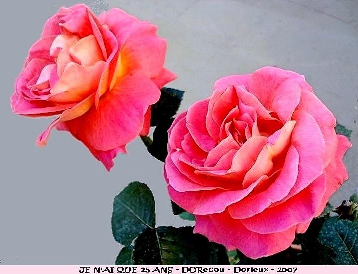 Résultat d'images pour rose je n'ai que 25 ans