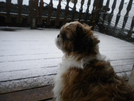Et quand la neige commence à tomber..;
