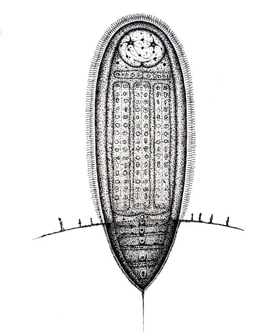 Amulette-Menhir (rift de Hûne, Patatonie)