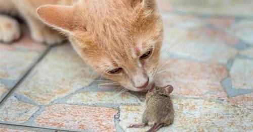 Des chats dans les ministères