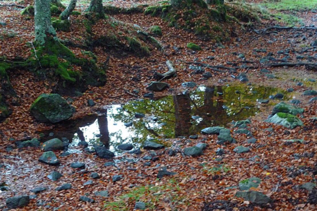 Forêt X 026