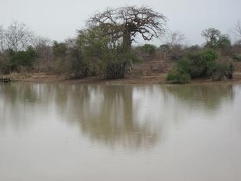 Bénin Parc de la Pendjari La mare sous la pluie
